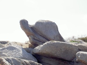 Ile Grande - Le Corbeau 8