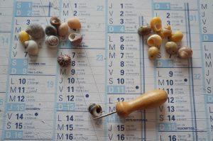 Perçage des petits coquillages 1