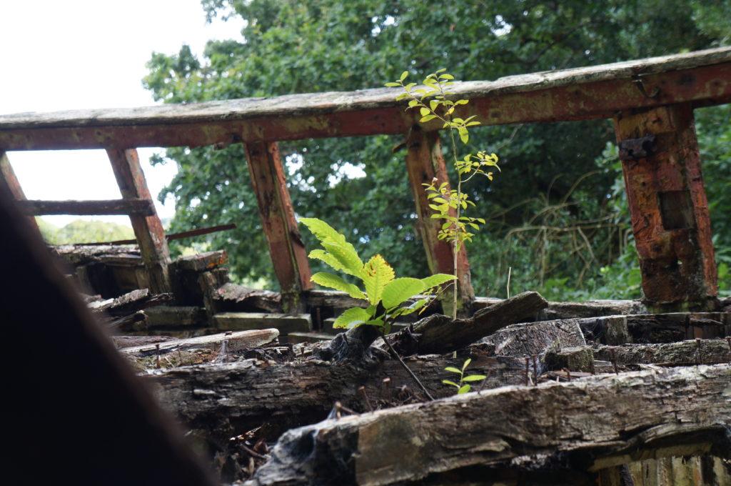 La végétation sur une épave